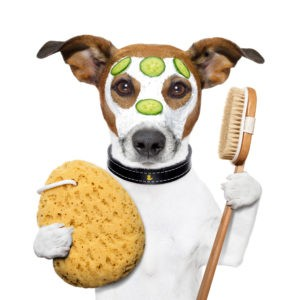 TLC Pet Grooming & Doggy Daycare is a great little business servicing an expanding market providing pet owners knowing their pets getting looked after.